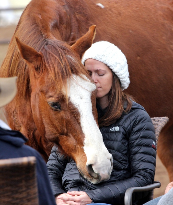 Healing Horse, Therapy Horses Healing People