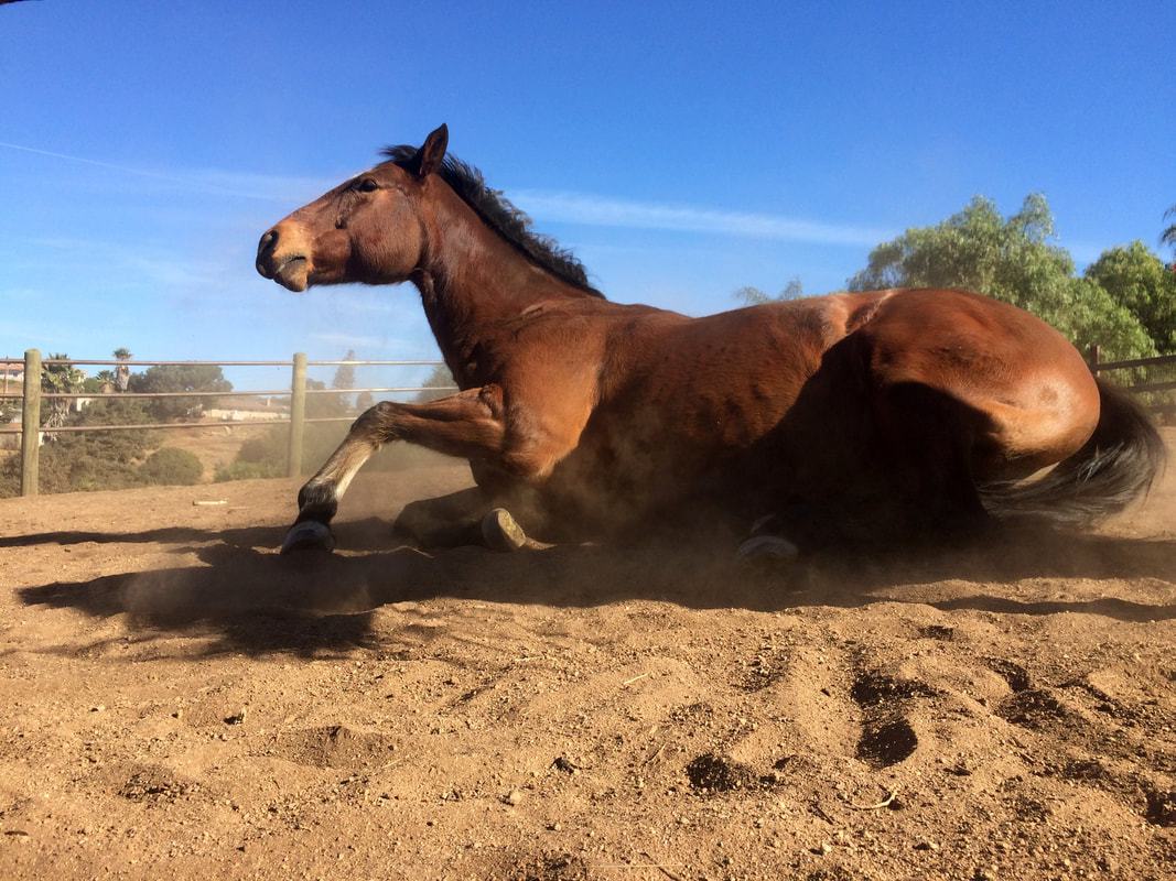 how to make your horse lay down
